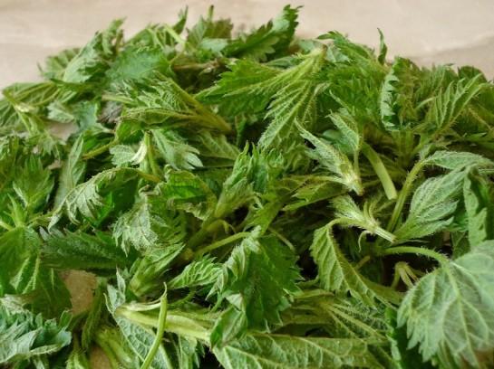 весенний рецепт оладьи из крапивы 1