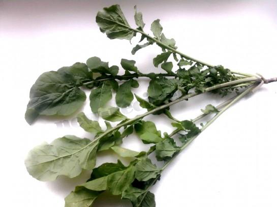 руккола салат фото 2