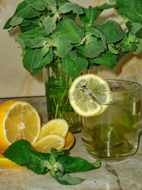 чай с лимоном и мятой 4