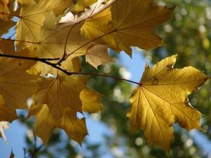 Самый красивый осенний салат Кленовые листья