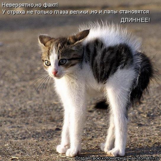 котенок с пятнышком-сердечком