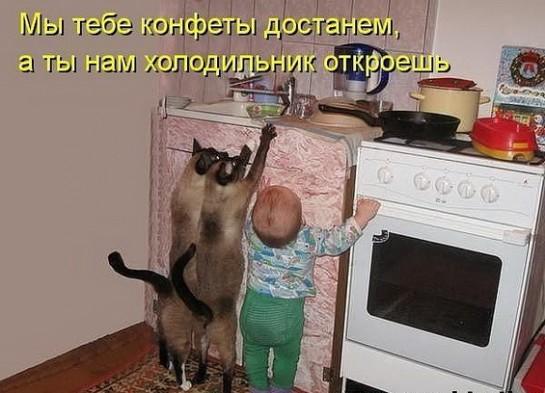 смешные картинки с едой и котами) (1)