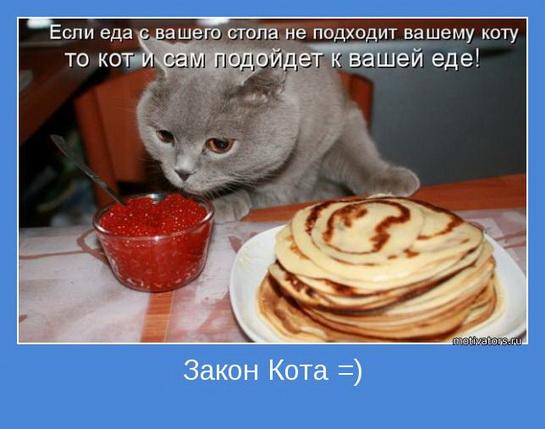смешные картинки с едой и котами) (10)