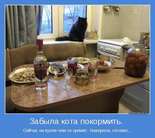 смешные картинки с едой и котами (11)