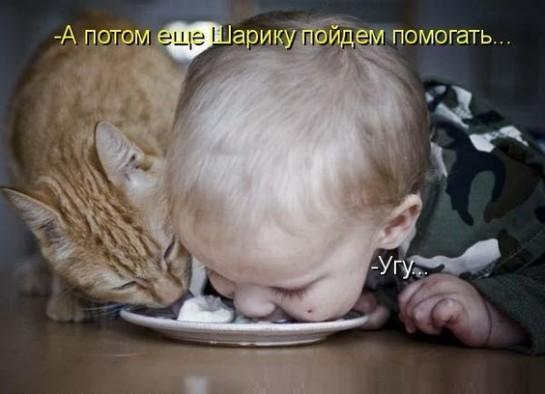 смешные картинки с едой и котами) (2)