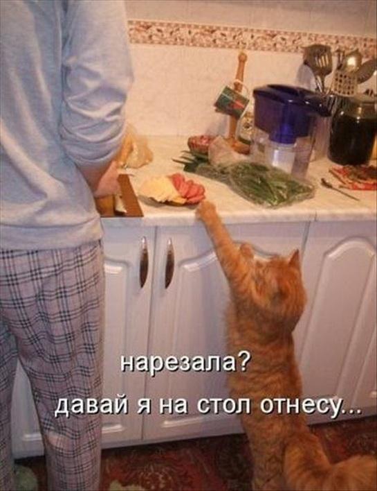 смешные картинки с едой и котами) (3)