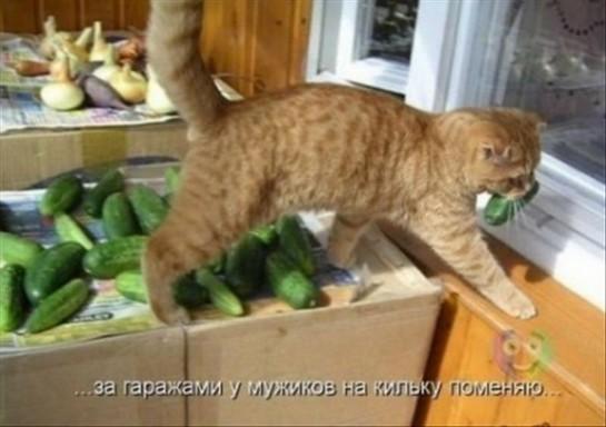 смешные картинки с едой и котами) (4)