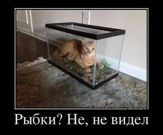 смешные картинки с едой и котами) (5)