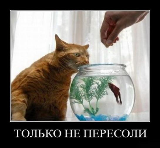 смешные картинки с едой и котами) (6)