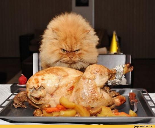 смешные картинки с едой и котами) (7)