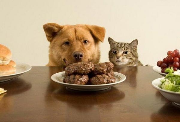 смешные картинки с едой и котами) (8)
