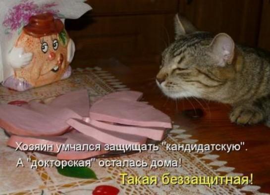 смешные картинки с едой и котами) (9)