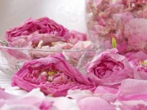 чайная роза с сахаром