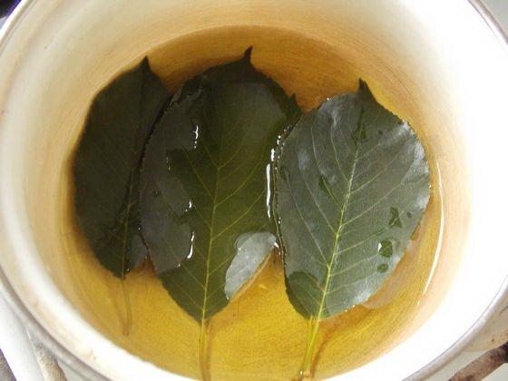 отвар вишнёвых листьев